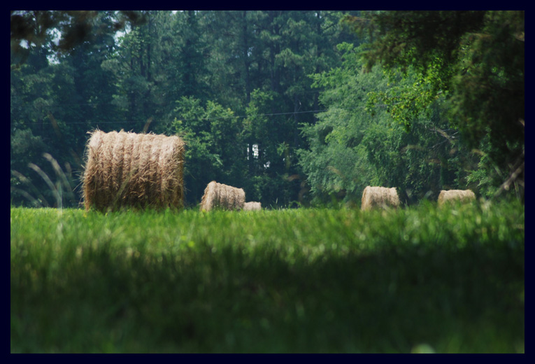 Hay Bales at North Bend Plantation